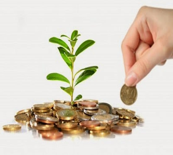 colocando monedas al rededor de planta